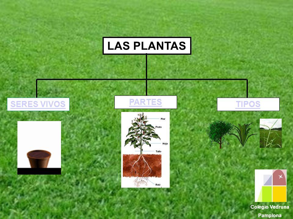 LAS PLANTAS SERES VIVOS PARTES TIPOS Colegio Vedruna Pamplona
