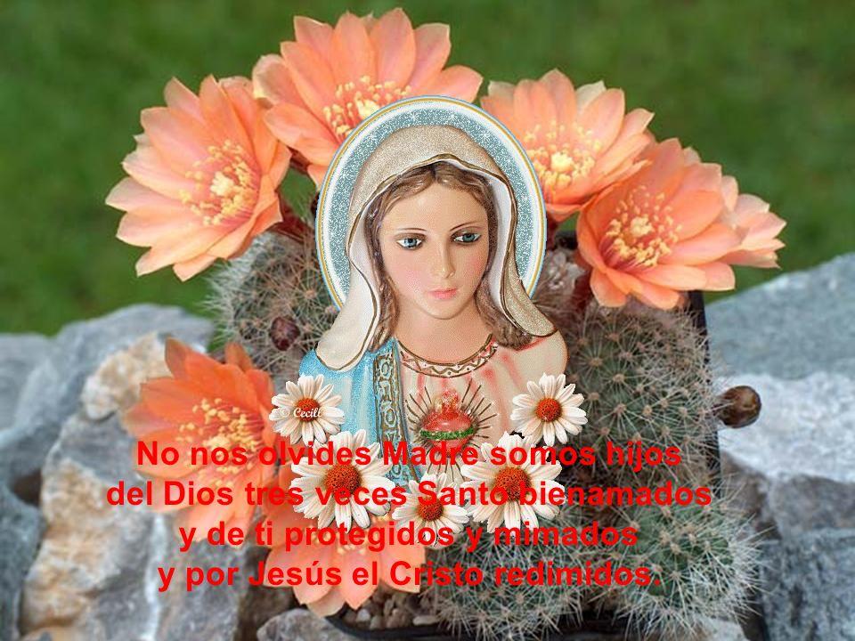 Y con fervor y fe he rezado el Ave tomando las palabras del Arcángel suplicándole ruegue por nosotros sus hijos que imploramos su socorro.