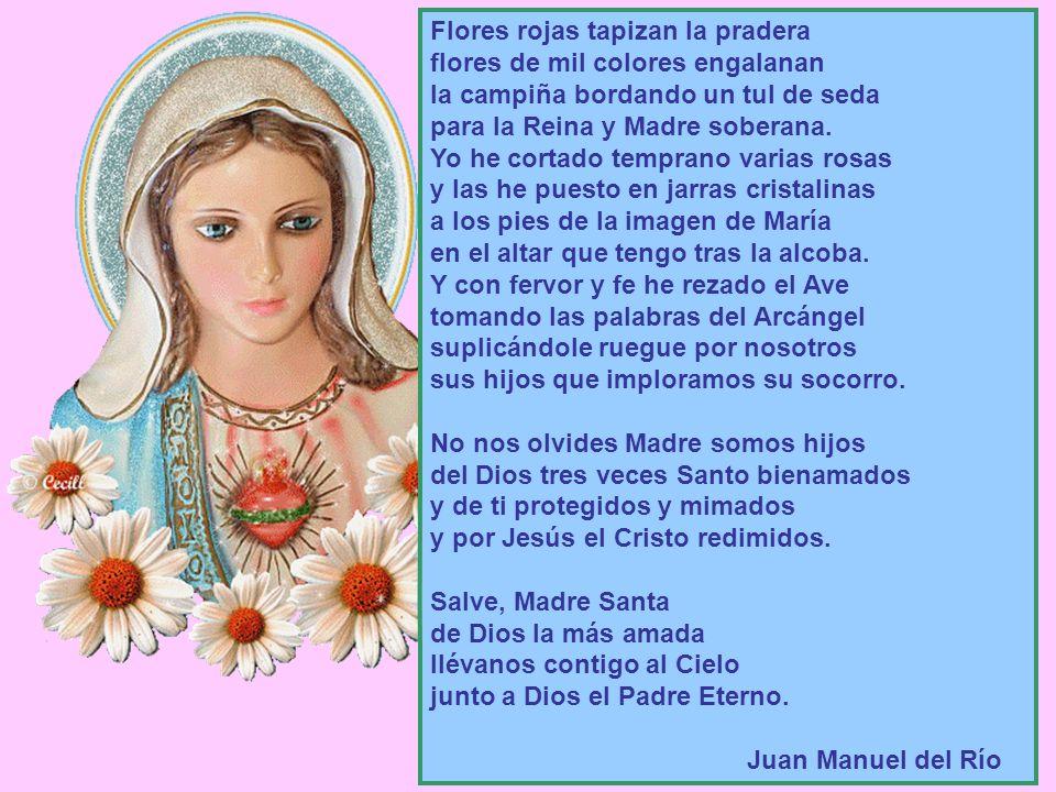 Salve, Madre Santa de Dios la más amada llévanos contigo al Cielo junto a Dios el Padre Eterno.