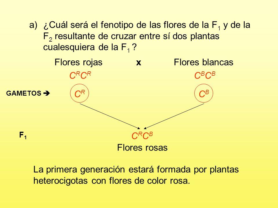 a)¿Cuál será el fenotipo de las flores de la F 1 y de la F 2 resultante de cruzar entre sí dos plantas cualesquiera de la F 1 .