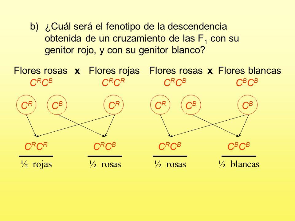 a)¿Cuál será el fenotipo de las flores de la F 1 y de la F 2 resultante de cruzar entre sí dos plantas cualesquiera de la F 1 ? Flores rosas x GAMETOS
