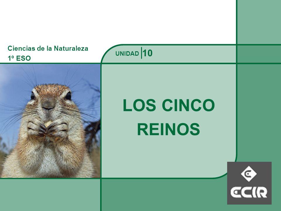Ciencias de la Naturaleza 1º ESO REINO ANIMALES Los cinco reinos UNIDAD Características: Eucarióticos.