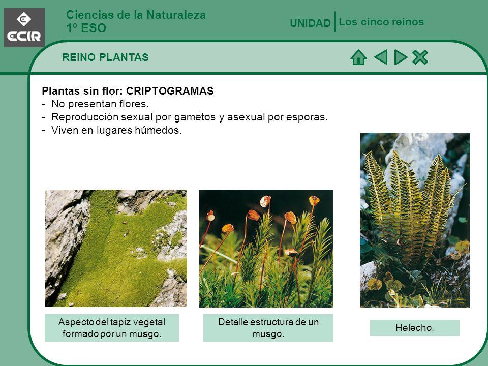 Ciencias de la Naturaleza 1º ESO REINO PLANTAS Los cinco reinos UNIDAD Plantas con flor: ESPERMATÓFITAS - Presentan flores.