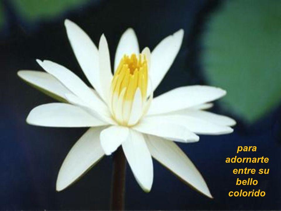Una flor y muchas flores flores para tí