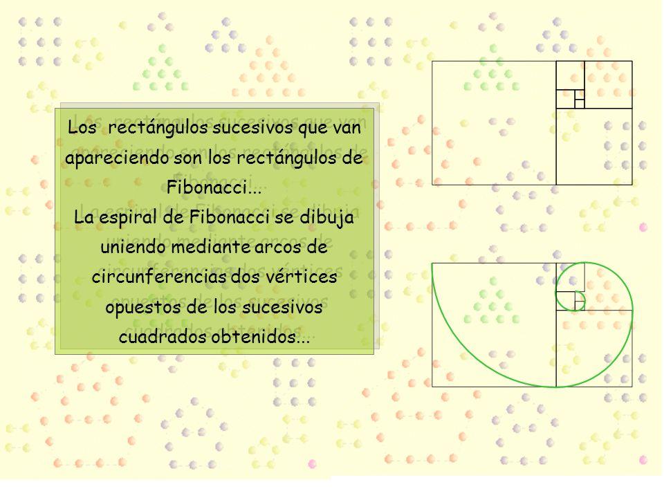 Los rectángulos sucesivos que van apareciendo son los rectángulos de Fibonacci... La espiral de Fibonacci se dibuja uniendo mediante arcos de circunfe
