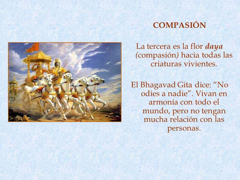 COMPASIÓN La tercera es la flor daya ( compasión ) hacia todas las criaturas vivientes.
