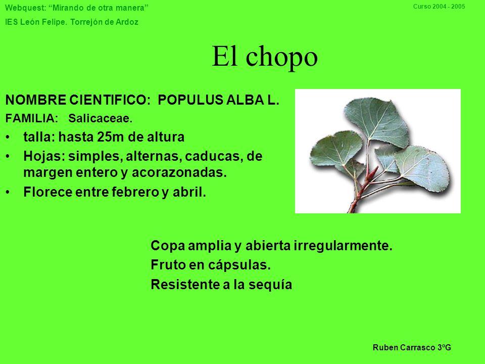 Webquest: Mirando de otra manera IES León Felipe. Torrejón de Ardoz Curso 2004 - 2005 MADRESELVA Nombre vulgar: Madreselva Nombre científico: Lonícera