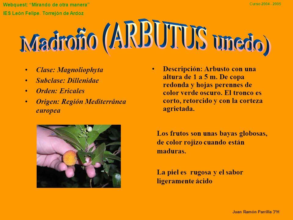 Webquest: Mirando de otra manera IES León Felipe. Torrejón de Ardoz Curso 2004 - 2005 ESTOS SON ALGUNOS ÁRBOLES DE NUESTRO INSTITUTO Presentación real