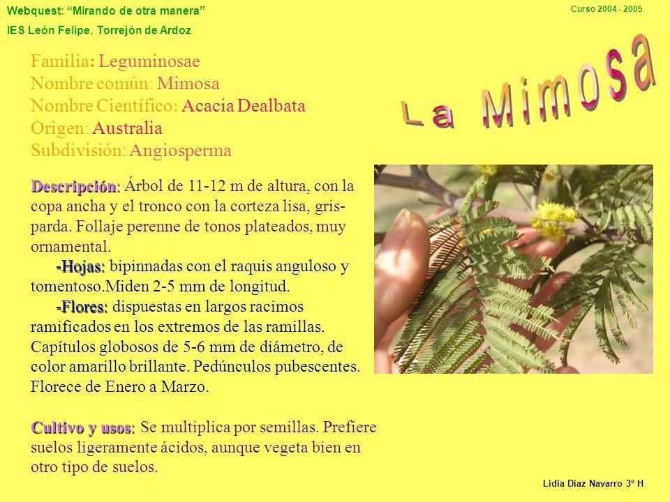 Webquest: Mirando de otra manera IES León Felipe. Torrejón de Ardoz Curso 2004 - 2005 Clase: Magnoliophyta Subclase: Dillenidae Orden: Ericales Origen