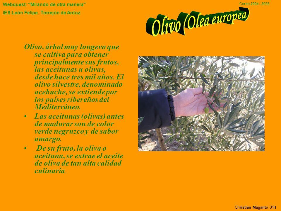 Webquest: Mirando de otra manera IES León Felipe. Torrejón de Ardoz Curso 2004 - 2005 Nombre científico : Malus domestica División : Magnoliophyta Ord