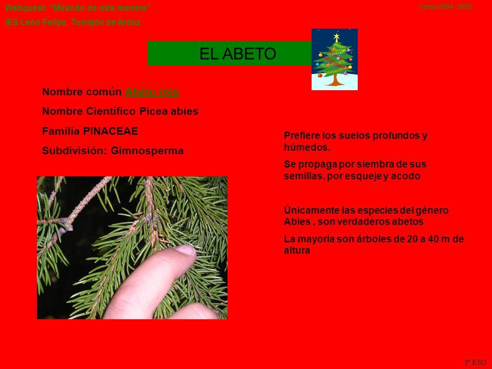 Webquest: Mirando de otra manera IES León Felipe. Torrejón de Ardoz Curso 2004 - 2005 Olivo, árbol muy longevo que se cultiva para obtener principalme