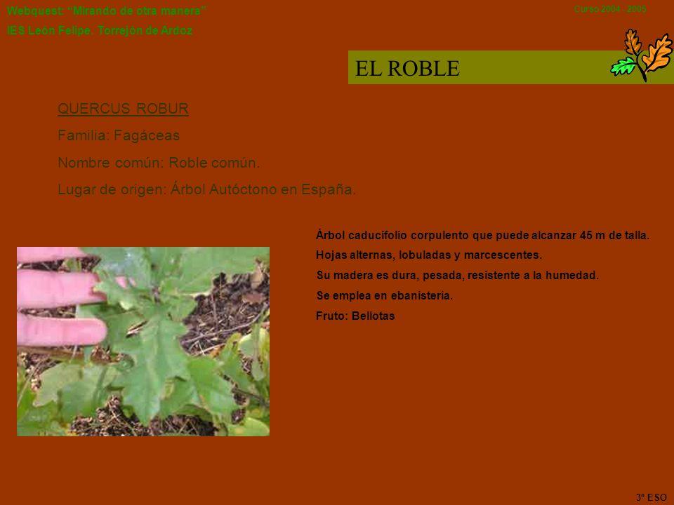 Webquest: Mirando de otra manera IES León Felipe. Torrejón de Ardoz Curso 2004 - 2005 EL ABETO Nombre común Abeto rojo Nombre Científico Picea abies F