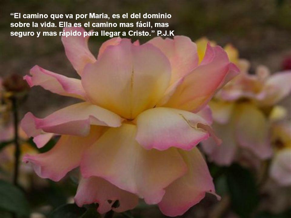 Mientras mas cobijados estemos en el corazón de la Madre de Dios, Ella nos cobijara mas pronto y mas seguro en el corazón de Dios. P.J.K