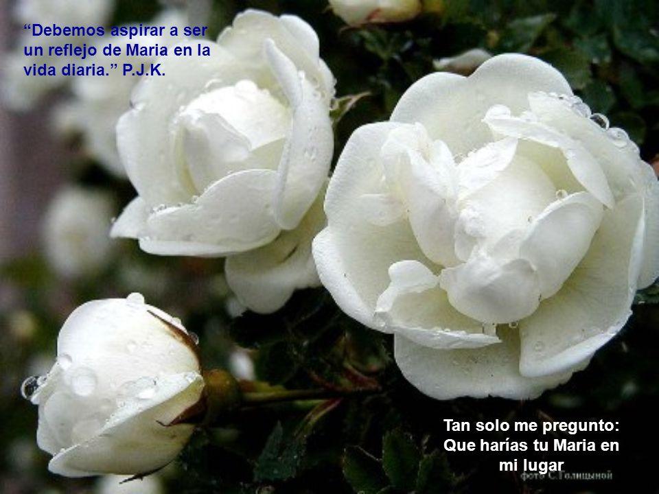 Mes de Maria Con Flores a Maria…