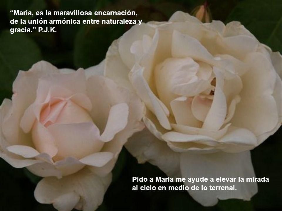 Maria tiene un corazón vigoroso…Porque del dolor de la cruz, brota la flor de la esperanza, de la confianza. P.J.K Maria, regálame un corazón vigoroso