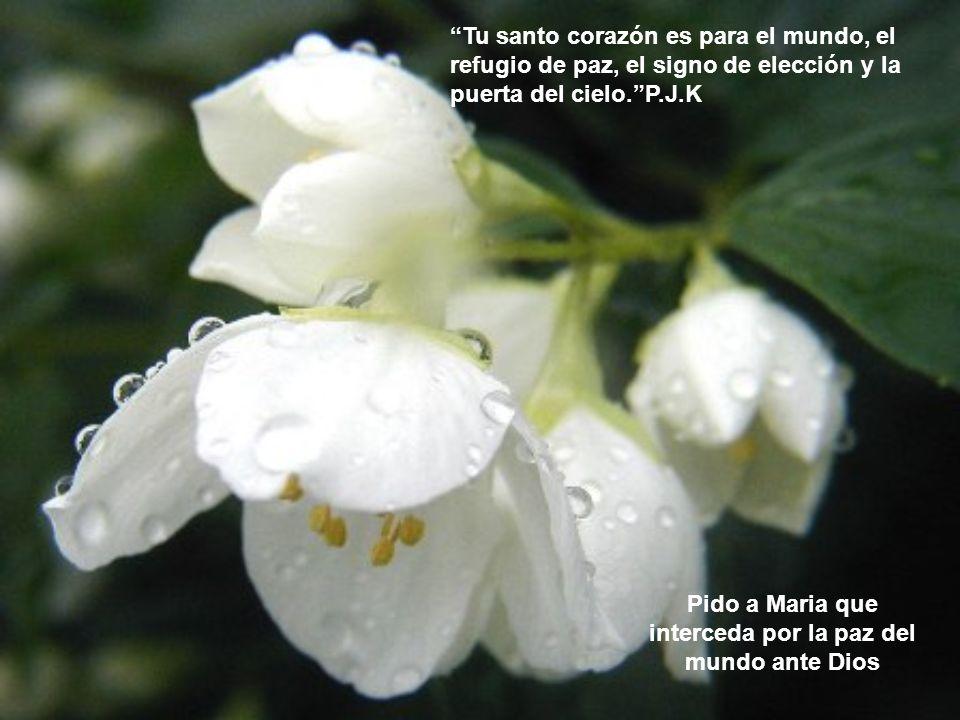 Maria, es la maravillosa encarnación, de la unión armónica entre naturaleza y gracia. P.J.K. Pido a Maria me ayude a elevar la mirada al cielo en medi