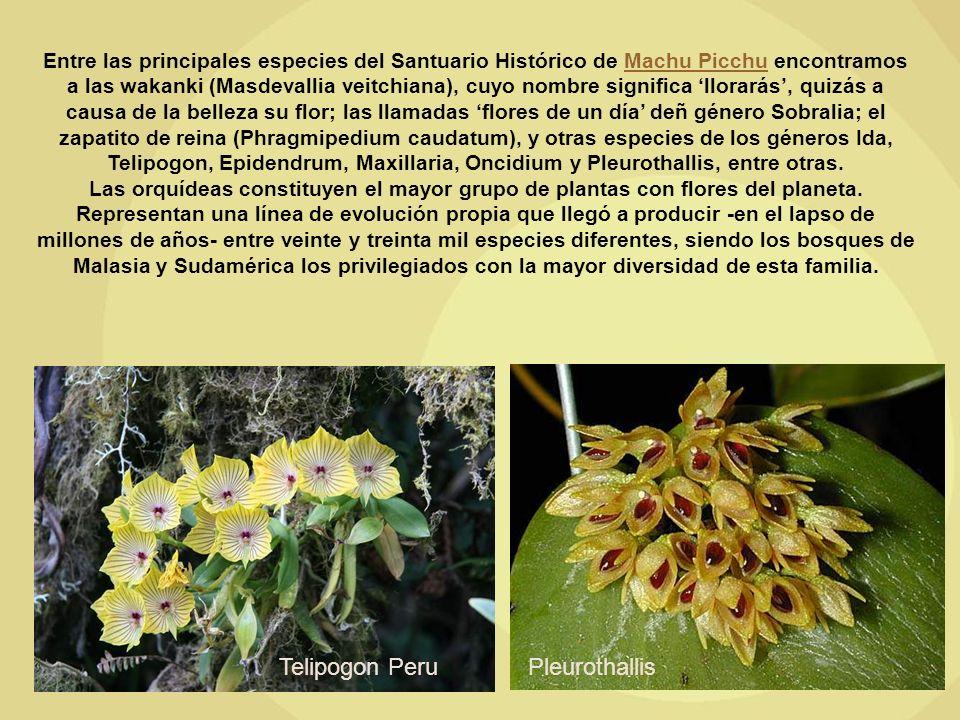 Entre las principales especies del Santuario Histórico de Machu Picchu encontramos a las wakanki (Masdevallia veitchiana), cuyo nombre significa llorarás, quizás a causa de la belleza su flor; las llamadas flores de un día deñ género Sobralia; el zapatito de reina (Phragmipedium caudatum), y otras especies de los géneros Ida, Telipogon, Epidendrum, Maxillaria, Oncidium y Pleurothallis, entre otras.