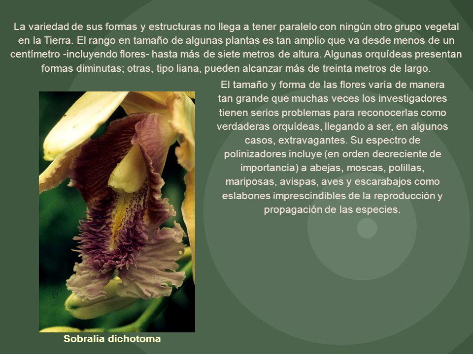 La variedad de sus formas y estructuras no llega a tener paralelo con ningún otro grupo vegetal en la Tierra. El rango en tamaño de algunas plantas es
