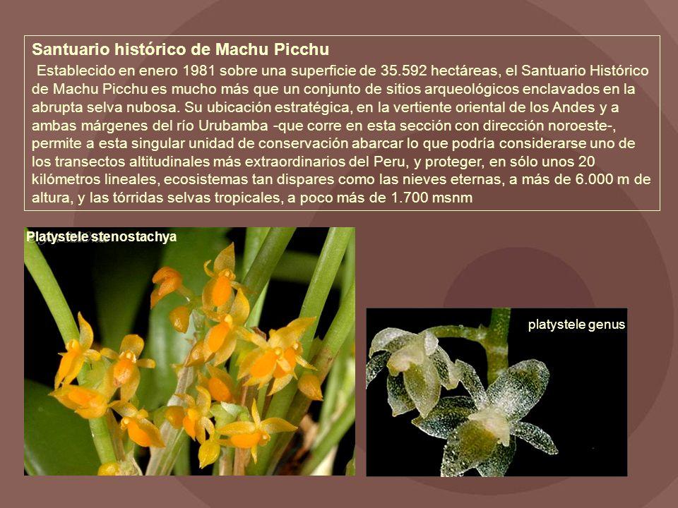 Santuario histórico de Machu Picchu Establecido en enero 1981 sobre una superficie de 35.592 hectáreas, el Santuario Histórico de Machu Picchu es mucho más que un conjunto de sitios arqueológicos enclavados en la abrupta selva nubosa.