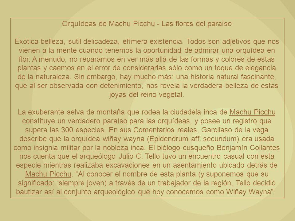 Orquídeas de Machu Picchu - Las flores del paraíso Exótica belleza, sutil delicadeza, efímera existencia. Todos son adjetivos que nos vienen a la ment