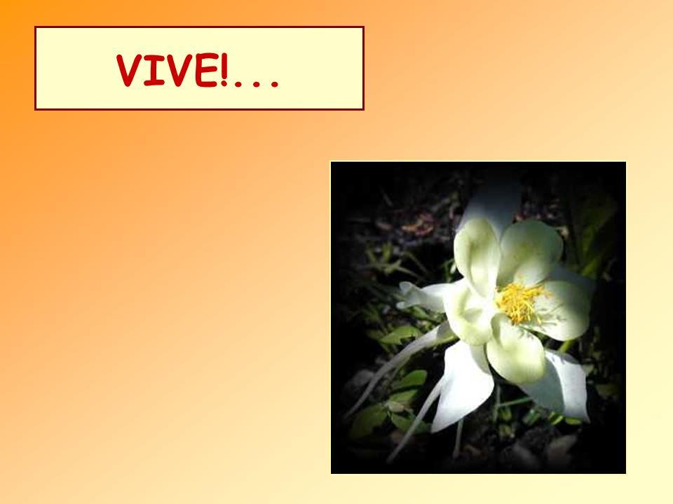VIVE!...