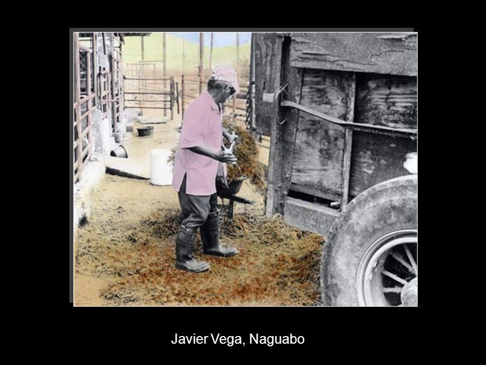 Javier Vega, Naguabo
