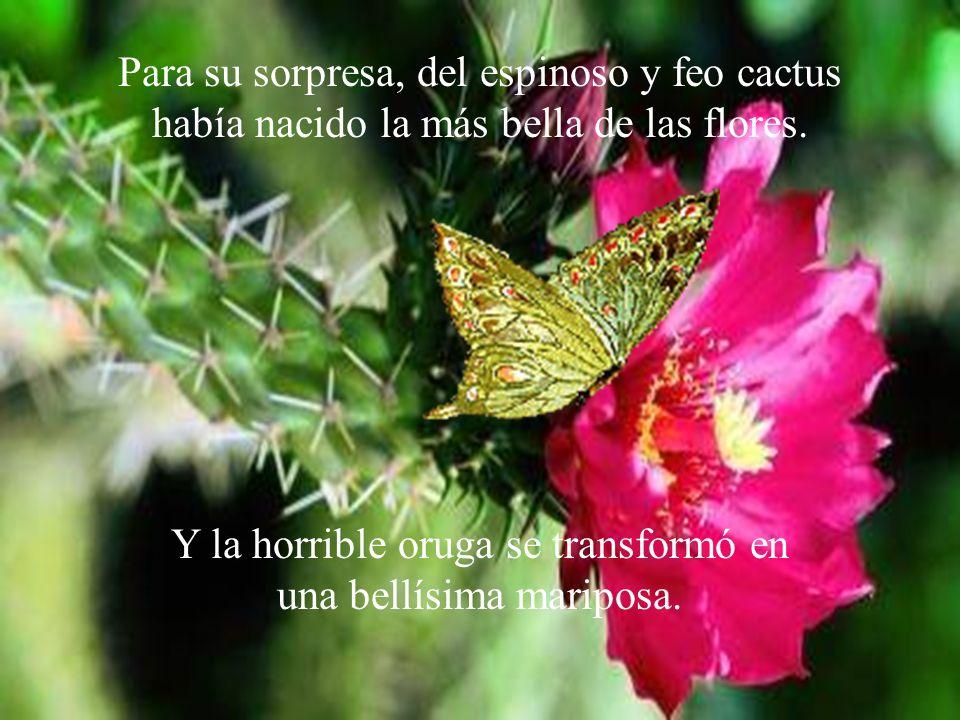 Para su sorpresa, del espinoso y feo cactus había nacido la más bella de las flores. Y la horrible oruga se transformó en una bellísima mariposa.