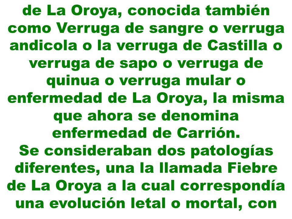 de La Oroya, conocida también como Verruga de sangre o verruga andicola o la verruga de Castilla o verruga de sapo o verruga de quinua o verruga mular