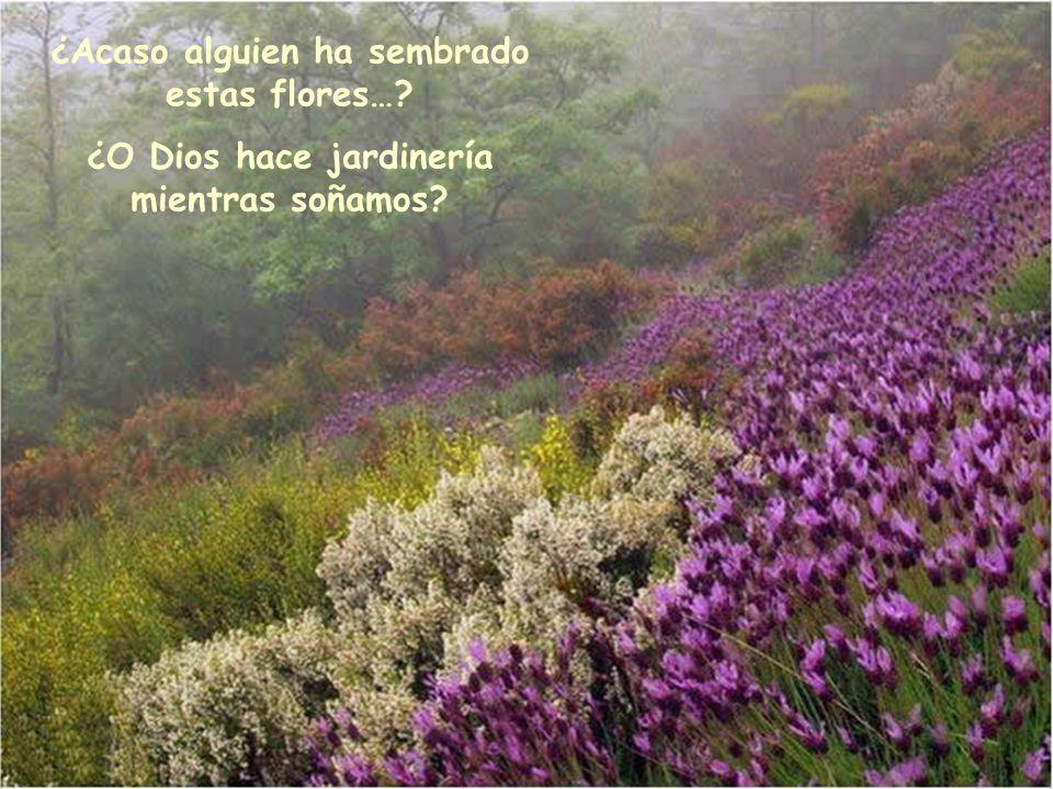 ¿Acaso alguien ha sembrado estas flores…? ¿O Dios hace jardinería mientras soñamos?