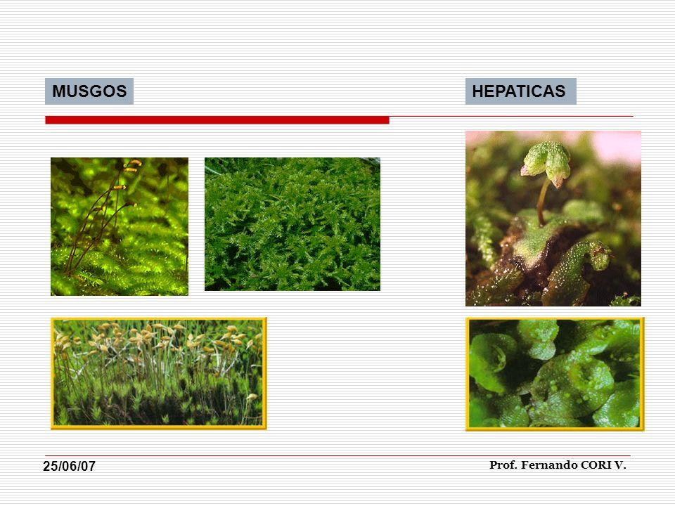 MUSGOSHEPATICAS Prof. Fernando CORI V. 25/06/07