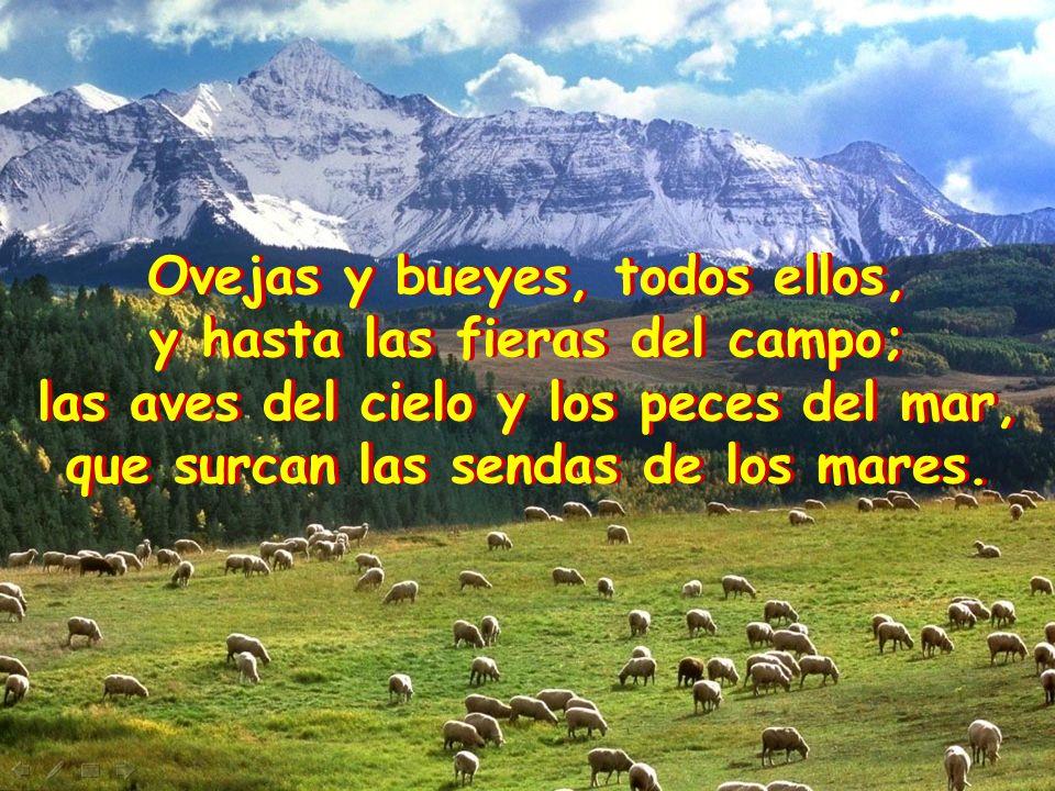 Ovejas y bueyes, todos ellos, y hasta las fieras del campo; las aves del cielo y los peces del mar, que surcan las sendas de los mares.