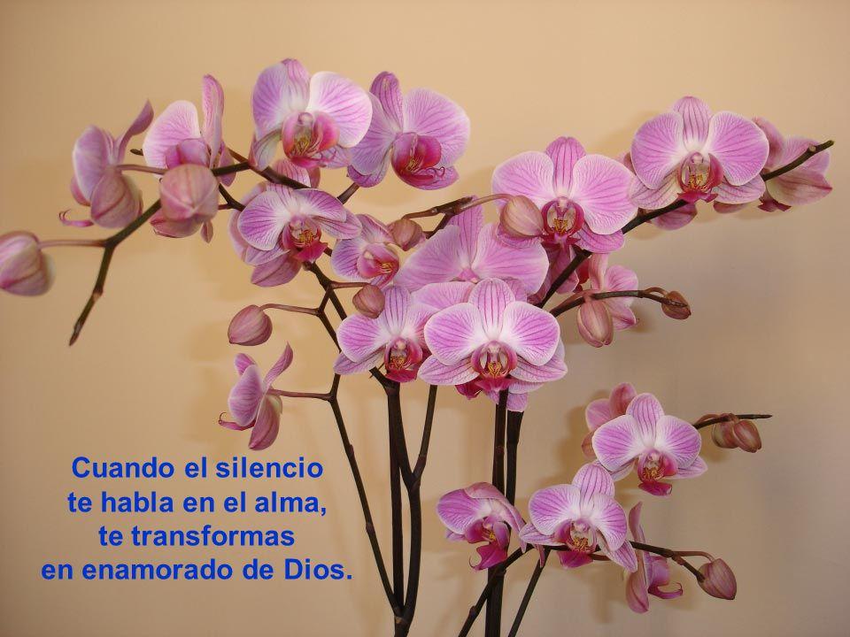 Cuando el silencio te habla en el alma, te transformas en enamorado de Dios.
