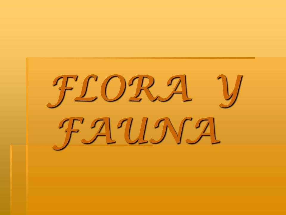FLORA Y FAUNA FLORA Y FAUNA