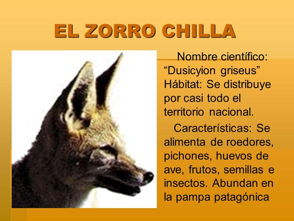 EL ZORRO CHILLA EL ZORRO CHILLA Nombre científico: Dusicyion griseus Hábitat: Se distribuye por casi todo el territorio nacional. Características: Se