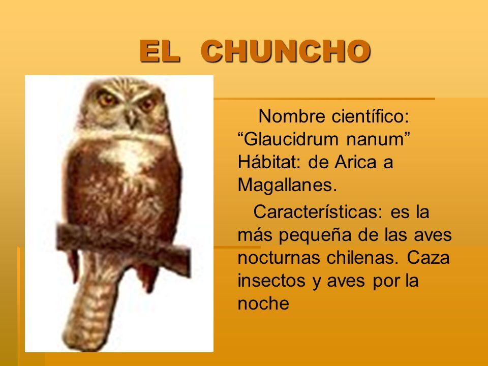 EL CHUNCHO EL CHUNCHO Nombre científico: Glaucidrum nanum Hábitat: de Arica a Magallanes. Características: es la más pequeña de las aves nocturnas chi