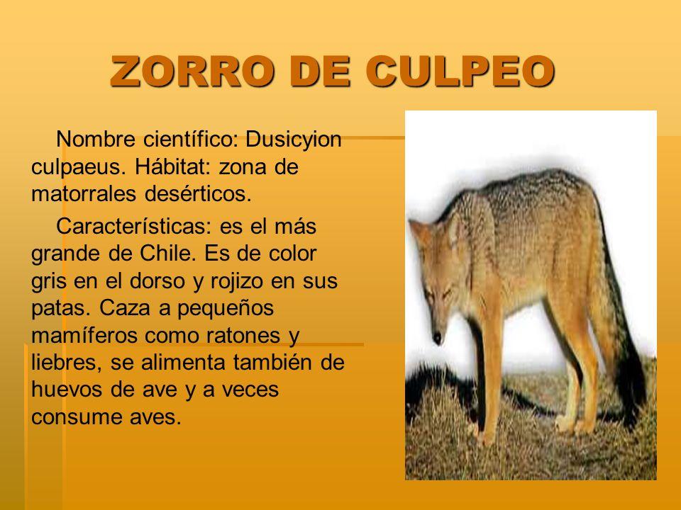 CACTO QUISCO CACTO QUISCO Nombre científico: Neporteria curvispina Hábitat: entre Coquimbo y Santiago.