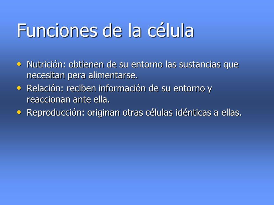Funciones de la célula Nutrición: obtienen de su entorno las sustancias que necesitan pera alimentarse. Nutrición: obtienen de su entorno las sustanci