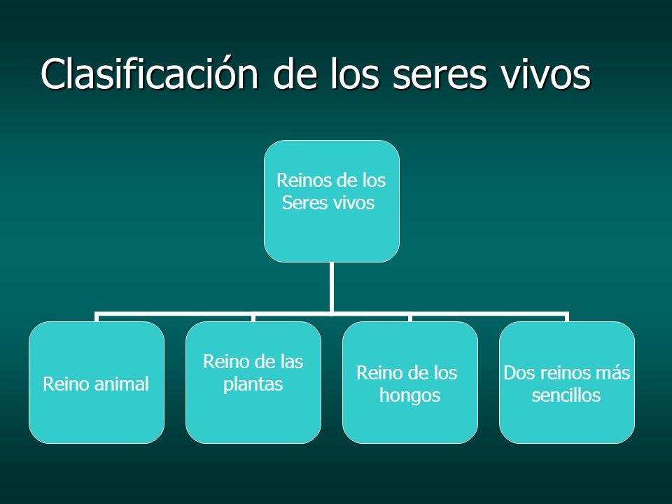 Clasificación de los seres vivos Reinos de los Seres vivos Reino animal Reino de las plantas Reino de los hongos Dos reinos más sencillos