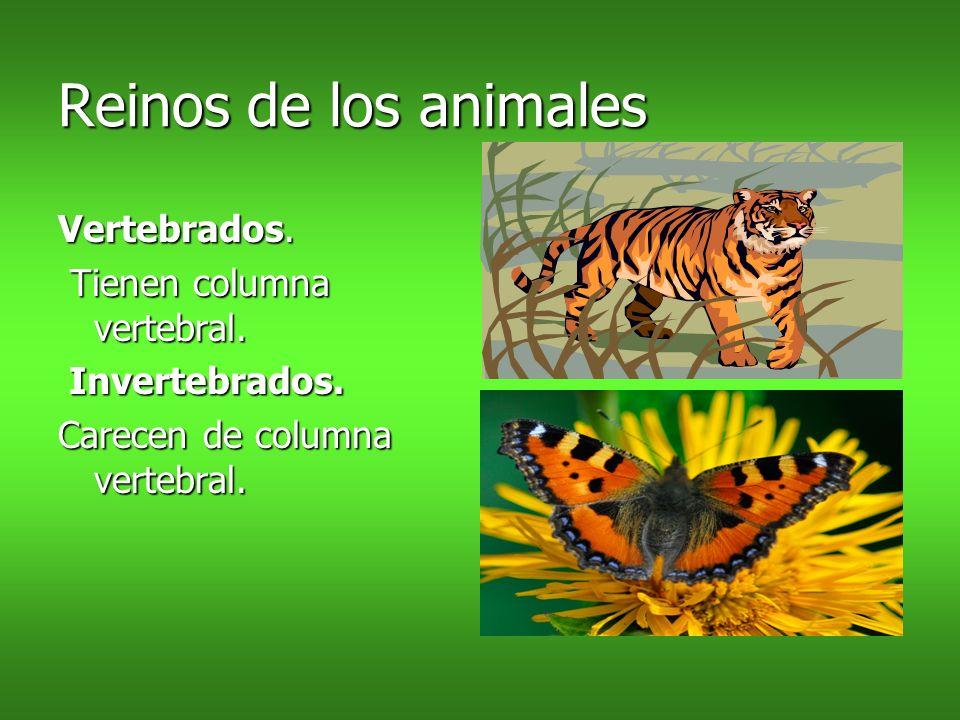 Reinos de los animales Vertebrados. Tienen columna vertebral. Tienen columna vertebral. Invertebrados. Invertebrados. Carecen de columna vertebral.