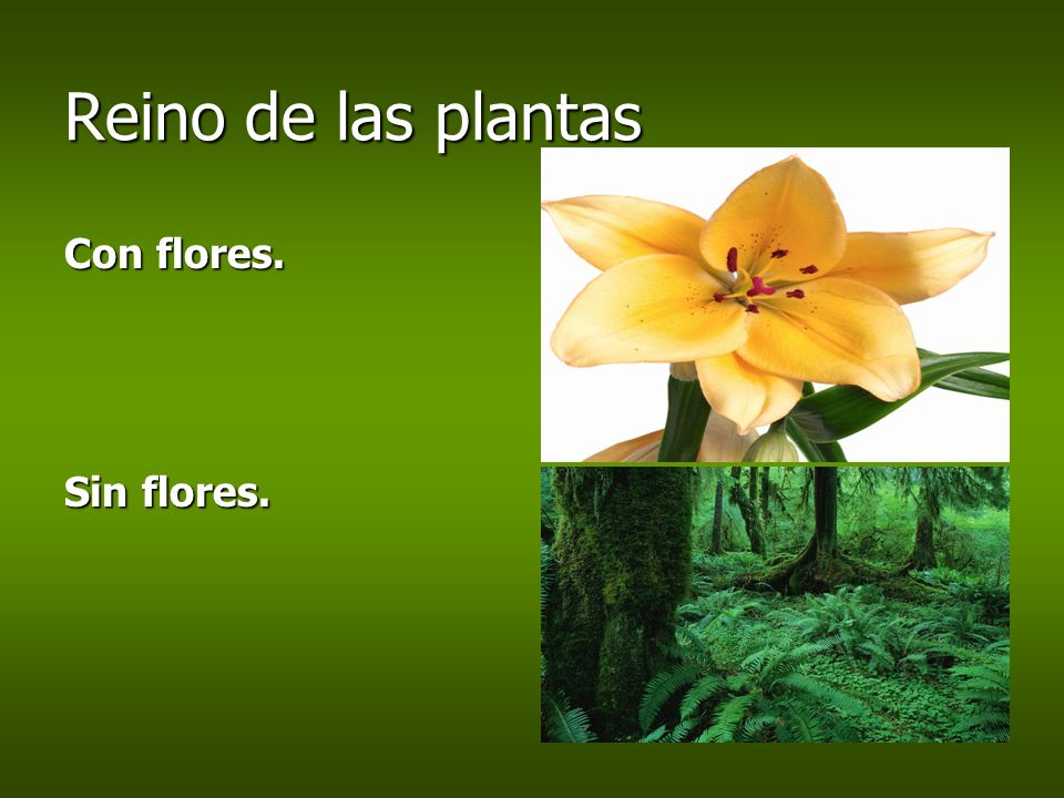 Reino de las plantas Con flores. Sin flores.