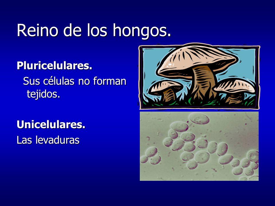 Dos reinos más sencillos Paramecios, amebas, algas unicelulares y pluricelulares.