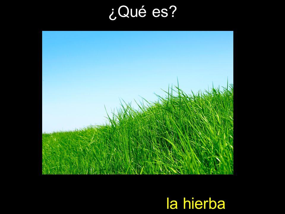 la hierba