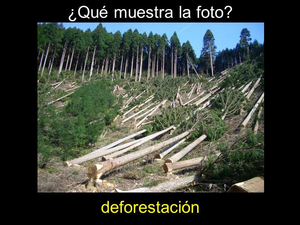¿Qué muestra la foto? deforestación