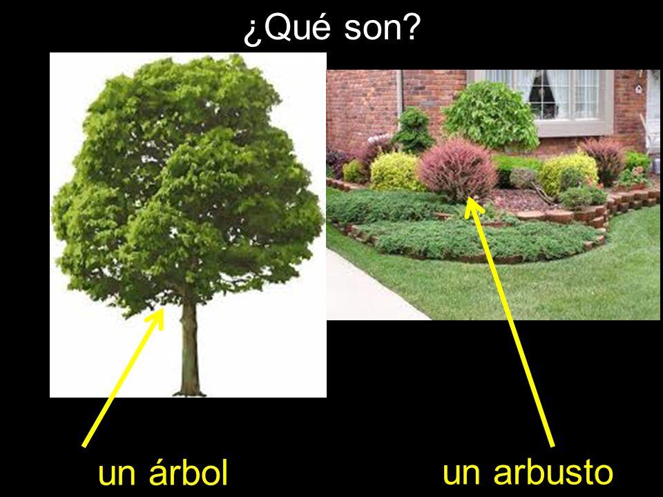 ¿Qué son? un árbol un arbusto