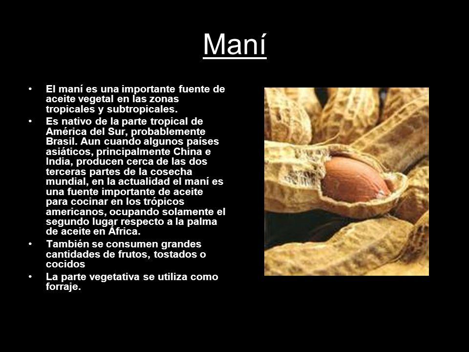 Maní El maní es una importante fuente de aceite vegetal en las zonas tropicales y subtropicales. Es nativo de la parte tropical de América del Sur, pr
