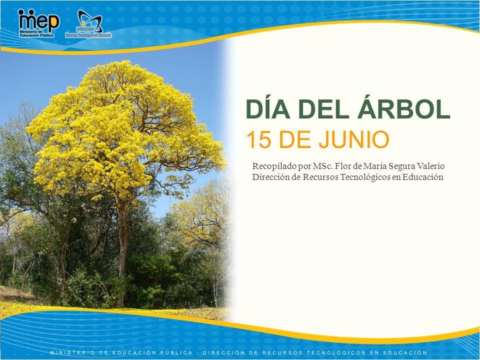 EL ARBOL DE GUANACASTE El árbol de guanacaste fue declarado como el Árbol Nacional de Costa Rica, el 31 de agosto de 1959, durante la administración del Lic.