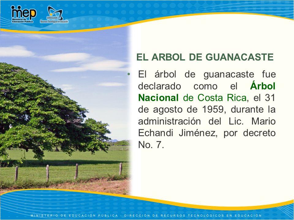 EL ARBOL DE GUANACASTE El árbol de guanacaste fue declarado como el Árbol Nacional de Costa Rica, el 31 de agosto de 1959, durante la administración d