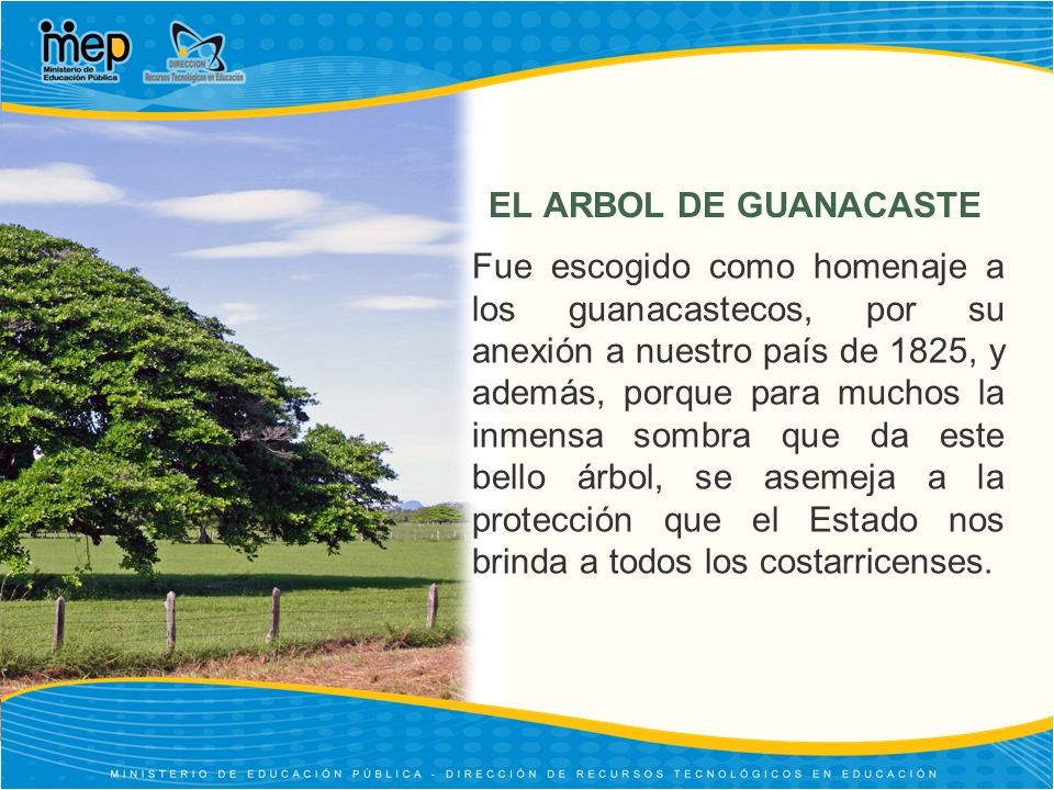 EL ARBOL DE GUANACASTE Fue escogido como homenaje a los guanacastecos, por su anexión a nuestro país de 1825, y además, porque para muchos la inmensa sombra que da este bello árbol, se asemeja a la protección que el Estado nos brinda a todos los costarricenses.