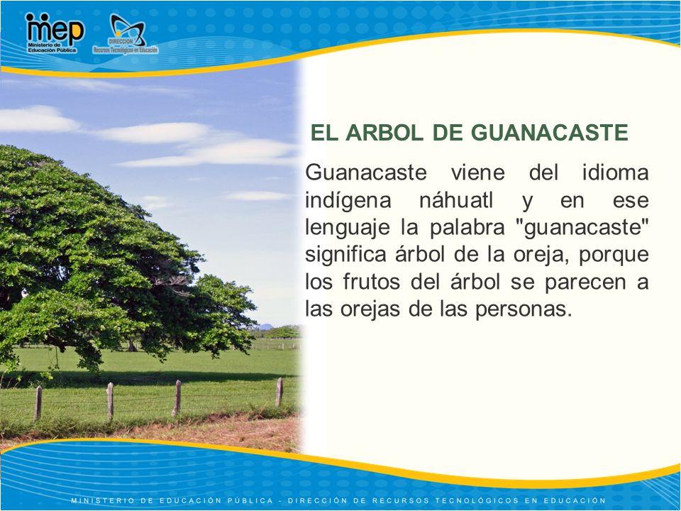 EL ARBOL DE GUANACASTE Guanacaste viene del idioma indígena náhuatl y en ese lenguaje la palabra