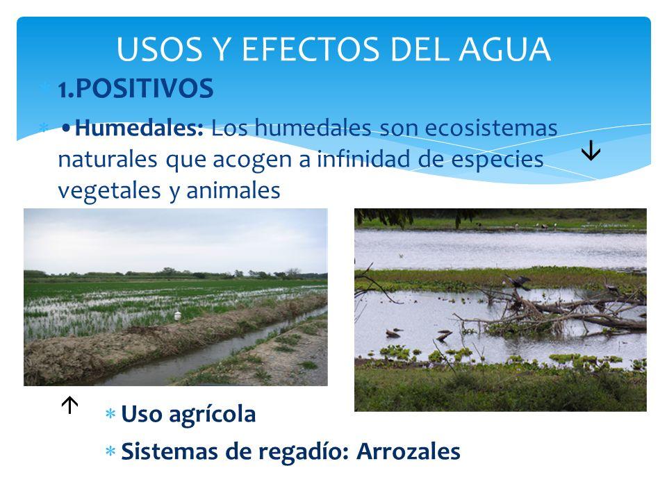 1.POSITIVOS Humedales: Los humedales son ecosistemas naturales que acogen a infinidad de especies vegetales y animales Uso agrícola Sistemas de regadí